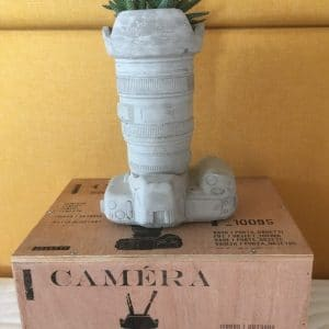 Viirukirjotähti istutettuna kameran muotoiseen betoniruukkuun, jonka ovat yhteistyössä suunnitelleet Seletti ja Marcantonio Raimondi Malerba.